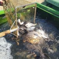 2020 Mischfischbesatz März 3