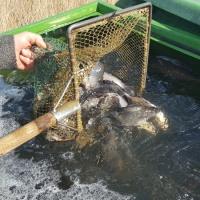 2020 Mischfischbesatz März 2