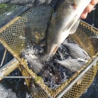 2020 Mischfischbesatz März 4